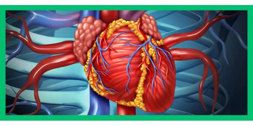 Профилактика сердечно-сосудистых заболеваний с помощью иммуномодуляторов: миф или реальность?